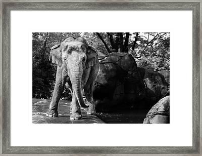 Dancing Elephant Framed Print