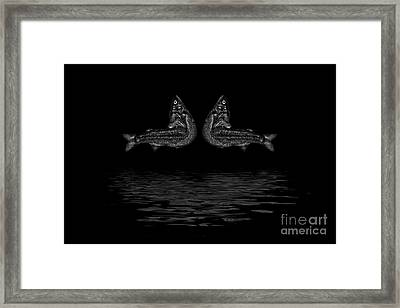 Dancing Fish At Night 2 Framed Print by Evgeniy Lankin