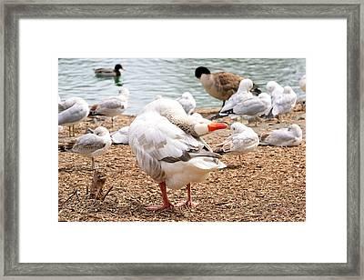 Dancing Goose 2 Framed Print by Bob Gross