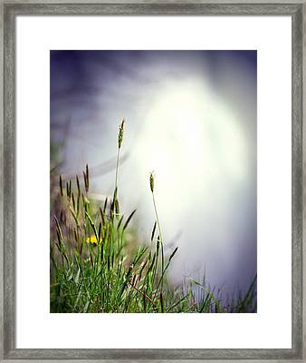 Dancing Grass Framed Print