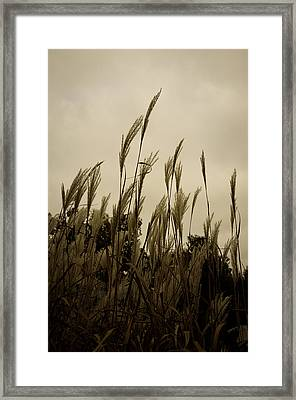 Dancing Grass Framed Print by Tgchan