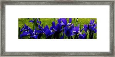 Dancing In The Breeze Framed Print by Bruce Bley