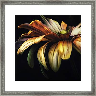 Dancing In The Dark Framed Print