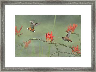 Dancing In The Flowers Framed Print