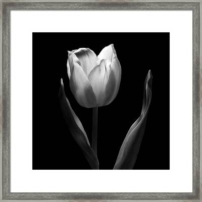Abstract Black And White Tulips Flowers Art Work Photography Framed Print by Artecco Fine Art Photography