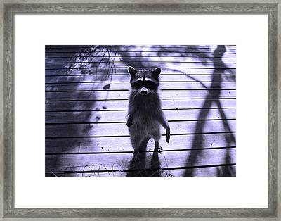 Dancing In The Moonlight Framed Print by Kym Backland