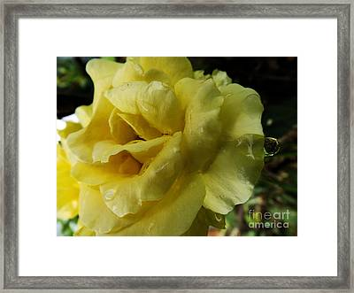 Dancing In The Rain Framed Print by Robyn King