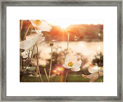 Dancing In The Sun Framed Print by Michelle Griffin