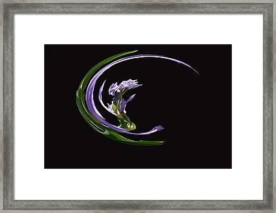 Dancing Iris 3 Framed Print
