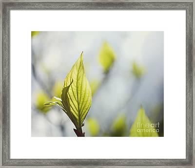 Dancing Leaves Framed Print