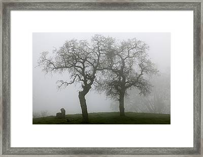 Dancing Oaks In Fog - Central California Framed Print by Ram Vasudev