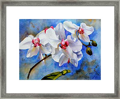 Dancing Orchids Framed Print by Betty M M   Wong