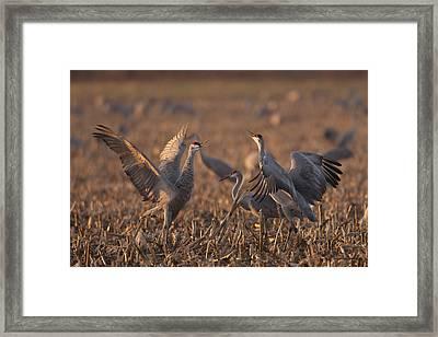 Dancing Sandhills Framed Print