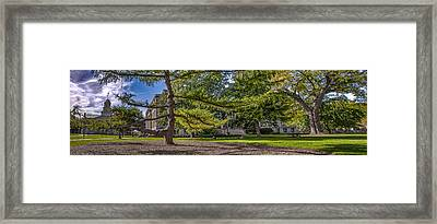 Framed Print featuring the photograph Dancing Tree by Ray Congrove