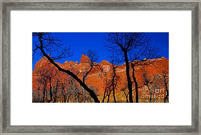 Dancing Trees Framed Print