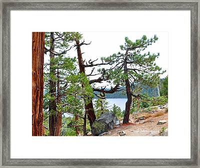 Dancing Trees Framed Print by Lula Adams