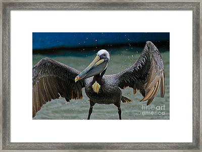 Dancing With A Pelican Framed Print