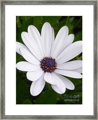 Dancing With The Morning Stars Framed Print by Lingfai Leung