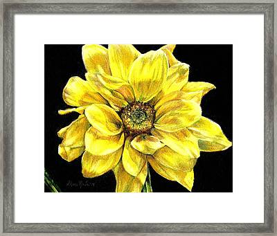 Dancing Yellow Daisy Framed Print by Shana Rowe Jackson