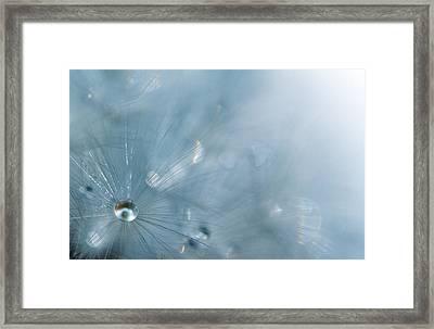 Dandelion - Luminosity Framed Print