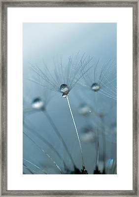 Dandelion - Standing Tall Framed Print by Rebecca Cozart