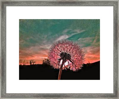 Dandelion At Sunset Framed Print by Marianna Mills