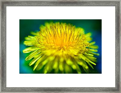 Dandelion Bloom  Framed Print by Iris Richardson