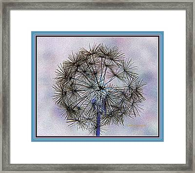 Dandelion Blue And Purple Framed Print by Kathy Barney