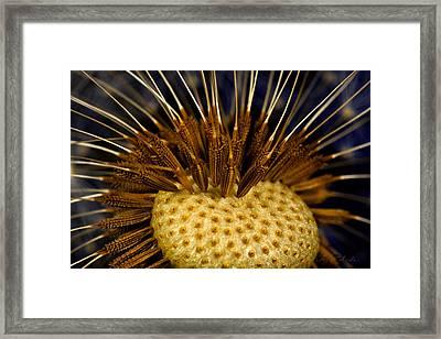 Dandelion Burst Framed Print by Iris Richardson