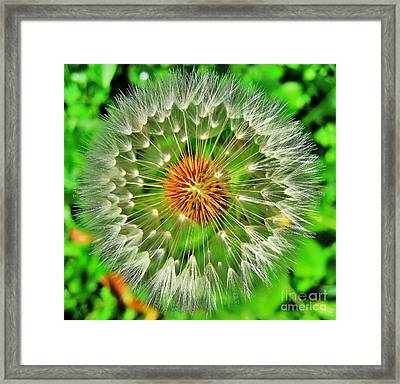 Dandelion Circle Framed Print by John King