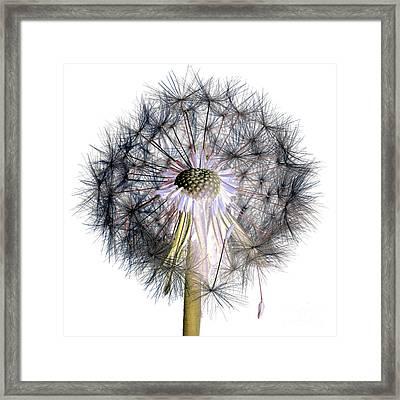 Dandelion Clock No.1 Framed Print