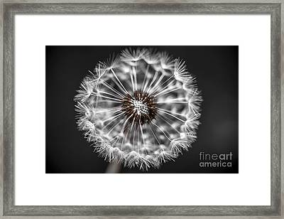 Dandelion Closeup Framed Print