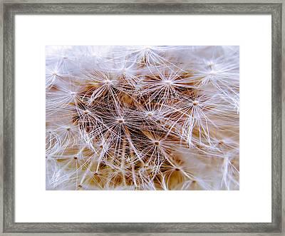 Dandelion Closeup Framed Print by Sherman Perry