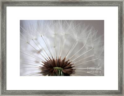 Dandelion Cross Section Framed Print by Kenny Glotfelty