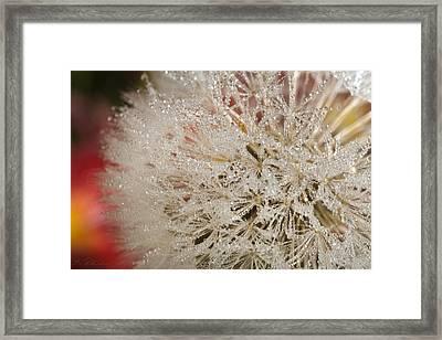 Dandelion Crystals Framed Print by Iris Richardson
