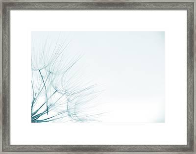 Dandelion Detail Against White Background Framed Print