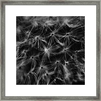 Dandelion Detail Black And White Framed Print