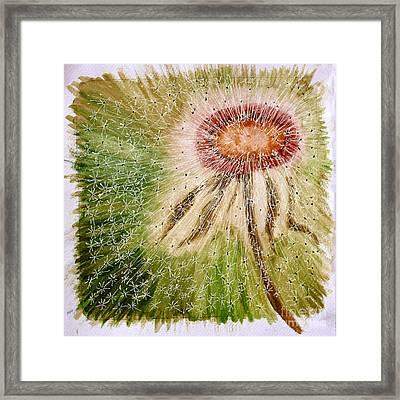 Dandelion Explosion Framed Print by Madeline Moore