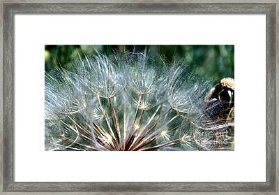 Dandelion Fan Framed Print