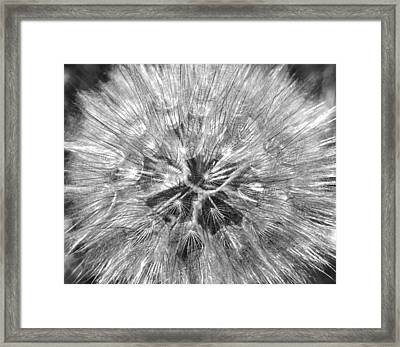 Dandelion Fireworks In Black And White Framed Print by Rona Black