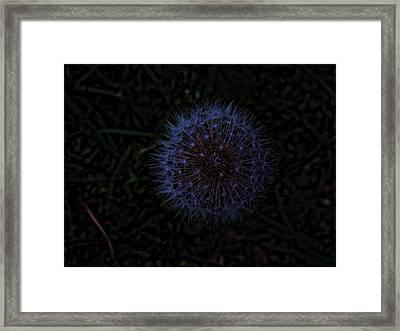 Dandelion Fireworks Framed Print