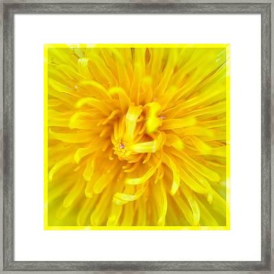 Dandelion In Macro Framed Print by Tommytechno Sweden
