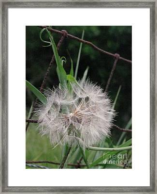 Dandelion In The Field Framed Print by Linda Walker