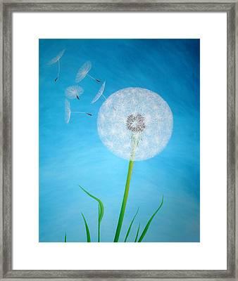 Dandelion In The Summer Framed Print by Sven Fischer