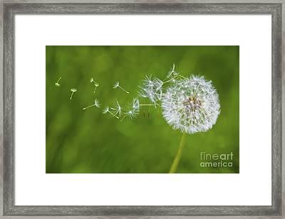 Dandelion In The Wind Framed Print
