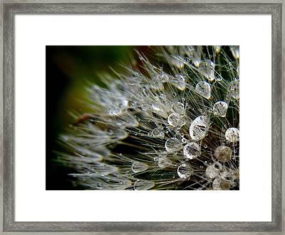 Framed Print featuring the photograph Dandelion Jewels by Suzy Piatt
