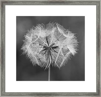 Dandelion Framed Print by John Topman
