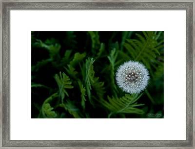 Dandelion Light Framed Print by Melissa Wyatt