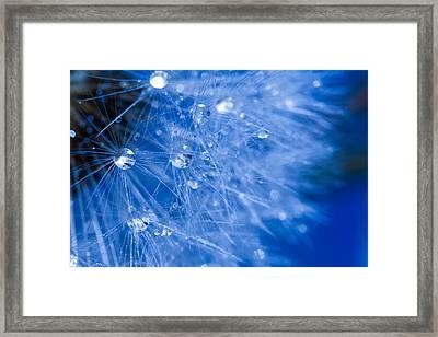 Dandelion Lights Framed Print by Rebecca Cozart