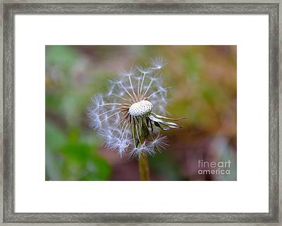 Framed Print featuring the photograph Dandelion by Lisa L Silva